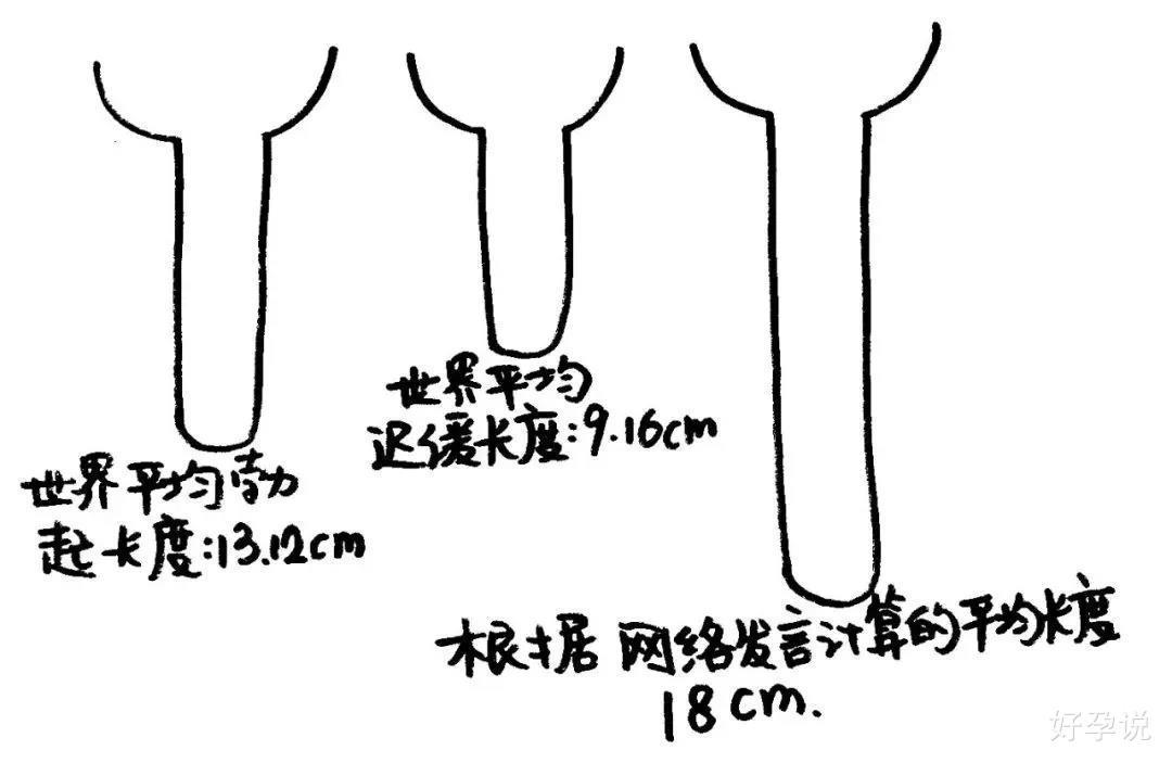 丁丁的平均长度是多少?插图1