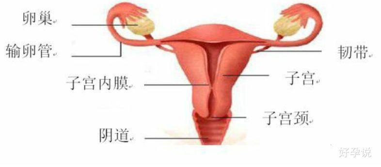 卵巢功能=银行存款?插图