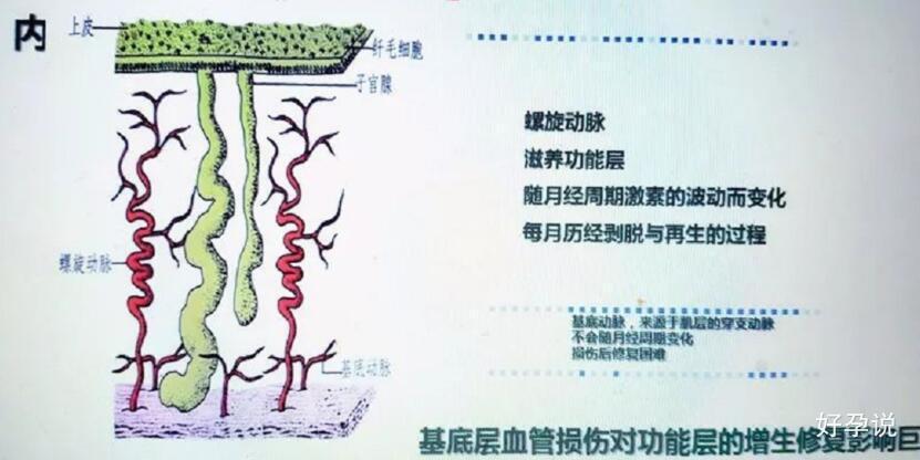 子宫内膜多少才算薄?插图3